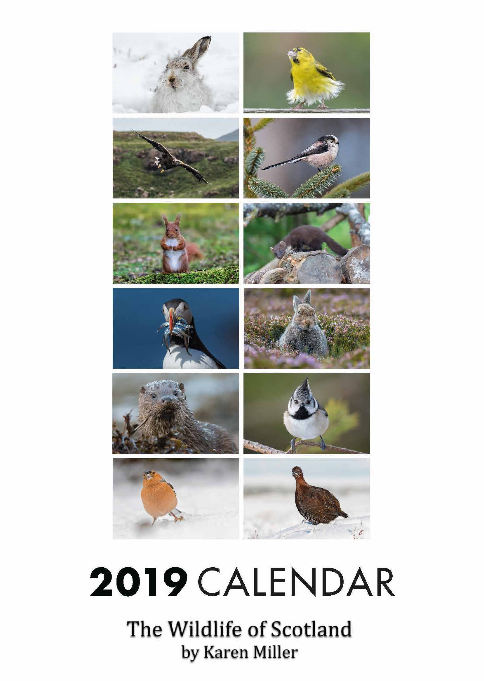Picture of Wildlife of Scotland 2019 A4 Calendar