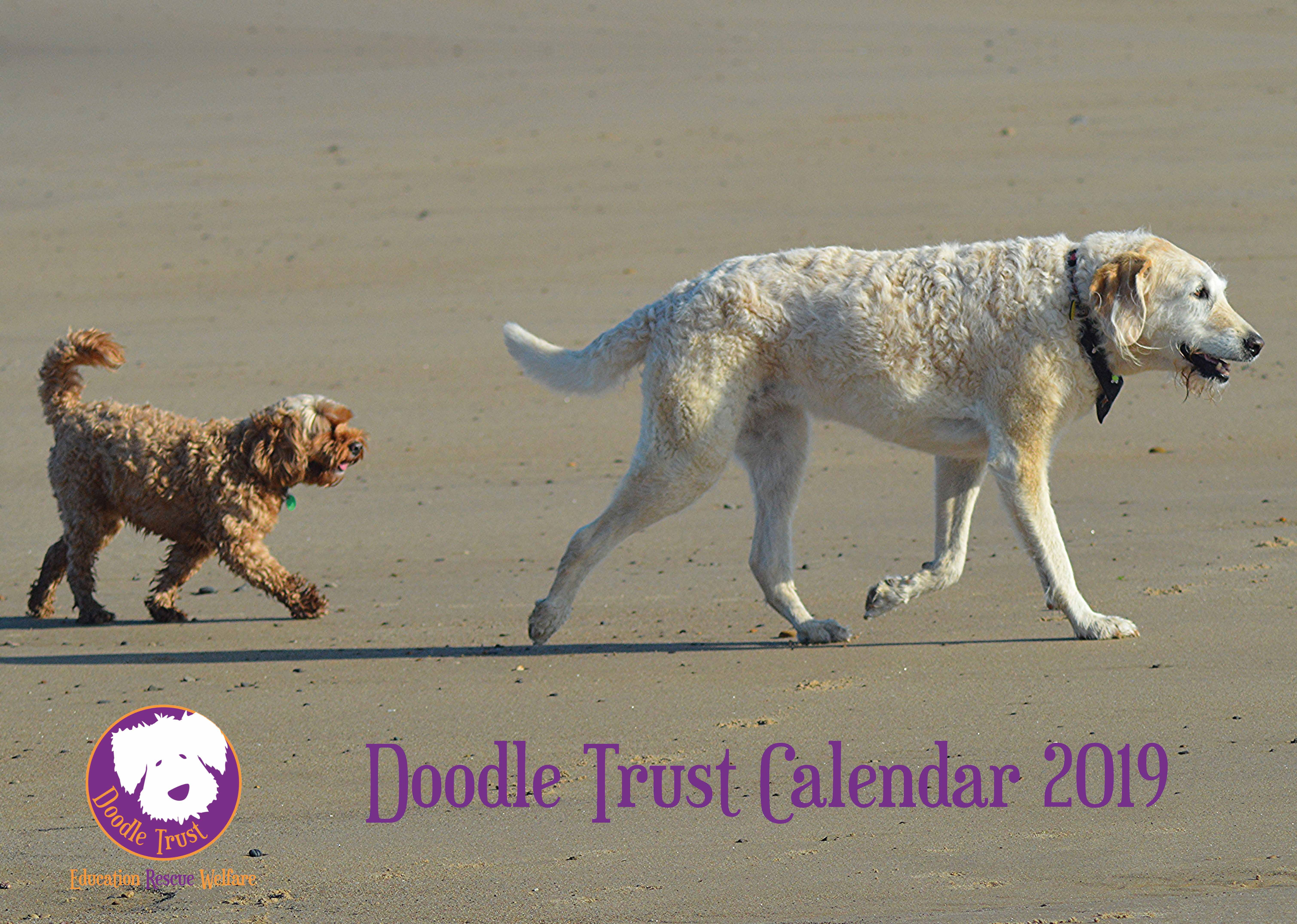 Picture of Doodle Trust 2019 A4 Spiral Booklet Calendar