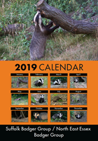 Picture of Badgers 2019 A4 Calendar