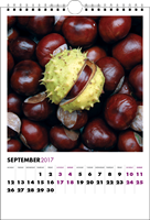 Picture of Spiral Calendar S05 Purple