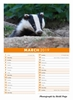 Picture of Badgers 2019 A5 Desk Calendar